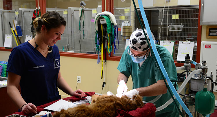 West Hills Animal Emergency and Critical Care Center